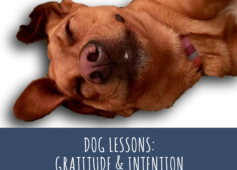 Dog Lessons: Gratitude and Intention